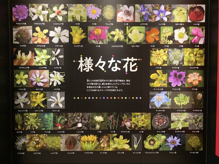 植物の多様性がよく現れた花。被子植物は、現在、25万種を超える最も多様化したグループと言われています