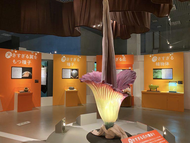 スマトラ島の低地熱帯雨林に自生する『ショクダイオオコンニャク』の実物大模型。ろうそくの燭台のような形をしていて、全体として1つの花のように機能しています。