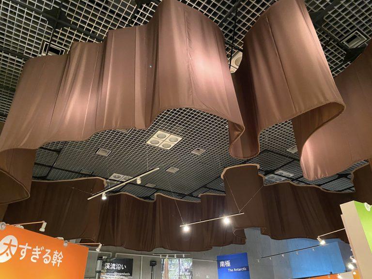 天井に吊られた『メキシコラクウショウ』の幹周りを再現した展示。カメラに写りきらないほどの大きさです。