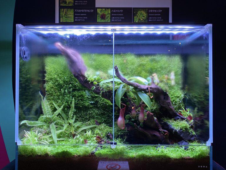 生きた食虫植物の展示。下の方に『ハエトリソウ』が葉を開いている様子が見えます。