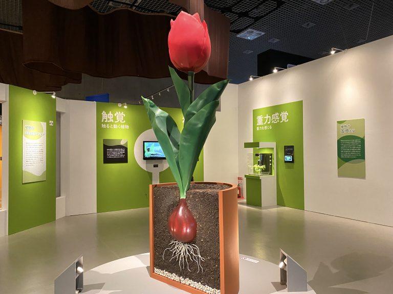『特別展「植物 地球を支える仲間たち」』会場風景。この後、大阪市立自然史博物館へと巡回(2022年1月14日〜4月3日)予定。